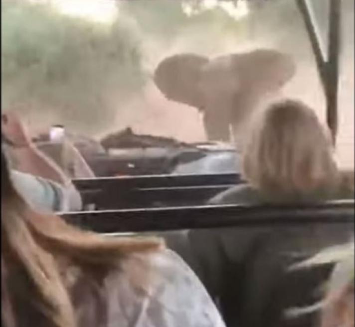 Τρόμος για τουρίστες στη Νότια Αφρική από ελέφαντα που τους πήρε στο κυνήγι