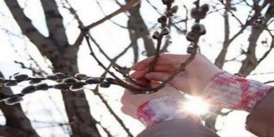 Έγινε και φέτος το θαύμα με τις ιτιές στη Ρωσία
