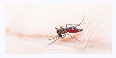 ΚΕΕΛΠΝΟ: Αναμενόμενη ως ένα βαθμό η εμφάνιση σποραδικών κρουσμάτων ελονοσίας